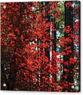 The Red Tree  Acrylic Print