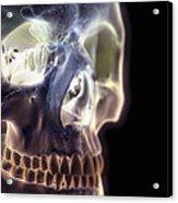 The Skull And Paranasal Sinuses Acrylic Print