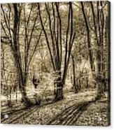 The Spring Forest Acrylic Print