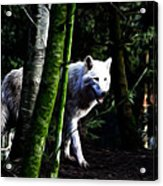 The White Wolf Acrylic Print