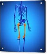 Thigh Bones Acrylic Print