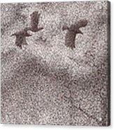 Three Crows Acrylic Print