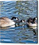 Three's A Crowd Acrylic Print