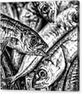 Tile Of Fishes Acrylic Print