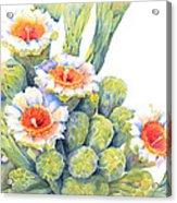 Top Bloomers Acrylic Print