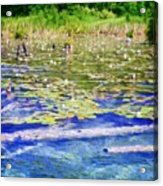 Torch River Water Lilies Acrylic Print