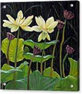 Touching Lotus Blooms Acrylic Print