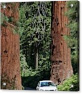 Tourism In Sequoia National Park Acrylic Print