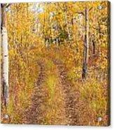 Trail In Golden Aspen Forest Acrylic Print