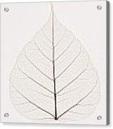Transparent Leaf Acrylic Print by Kelly Redinger