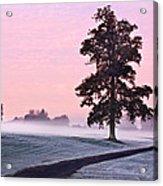 Tree At Dawn / Maynooth Acrylic Print