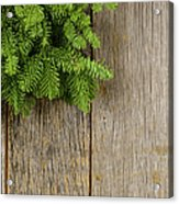 Tree Branch On Rustic Wooden Background Used For Christmas Decor Acrylic Print