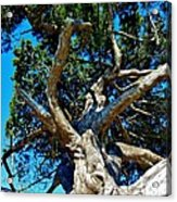 Tree Climbing Paradise Acrylic Print