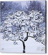 Tree Frosting Acrylic Print