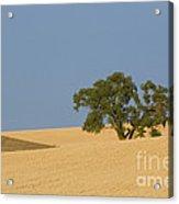 Tree In Field Acrylic Print