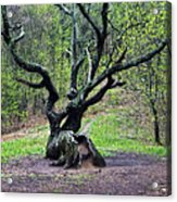 Tree In The Forest Acrylic Print