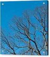 Tree Profile Acrylic Print