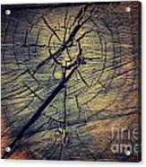 Tree Texture Background Acrylic Print