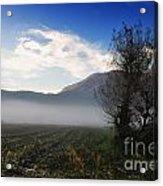 Tree With Fog Acrylic Print