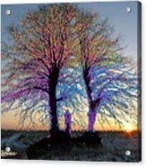Trees Aglow Acrylic Print