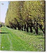 Trees Along A Walkway In A Botanical Acrylic Print