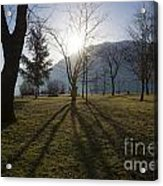 Trees In Backlit Acrylic Print