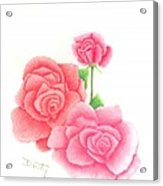 Trio Of Red Roses Acrylic Print