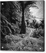 Tropical Forest Acrylic Print