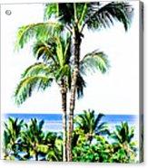 Tropical Palm Trees Acrylic Print