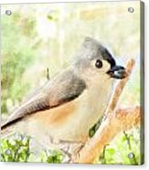 Tufted Titmouse With Seed - Digital Paint Acrylic Print