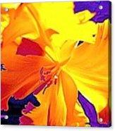 Tulip 6 Acrylic Print