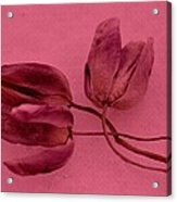 Tulip Lover Acrylic Print