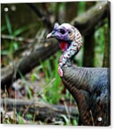 Turkey Acrylic Print