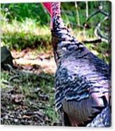 Turkey Lurkey Acrylic Print