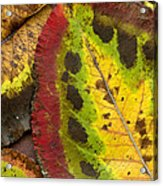 Turning Leaves Acrylic Print by Stephen Anderson