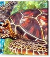 Turtle 1 Acrylic Print