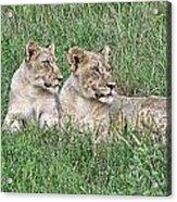 Twins Acrylic Print