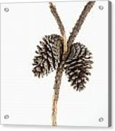 Two Pine Cones One Twig Acrylic Print