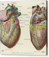 Two Views Of The Heart, With  The Parts Acrylic Print
