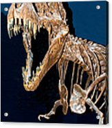 Tyrannosaurus Rex Acrylic Print