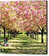 Under The Cherry Blossom Trees Acrylic Print