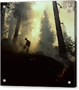 Usa, California, Forest Fire, Sequoia Acrylic Print