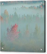 Usa, West Virginia, Canaan Valley State Acrylic Print