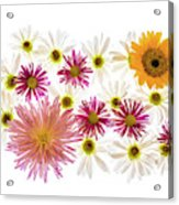 Variety Of Flowers Against White Acrylic Print