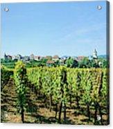 Vineyard, Alsace, France Acrylic Print