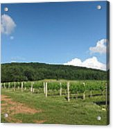 Vineyards In Va - 12127 Acrylic Print