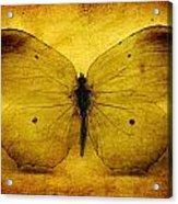 Vintage Grunge Butterfly Acrylic Print