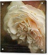 Vintage Tea Rose Acrylic Print