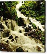 Wahkeena Creek Acrylic Print