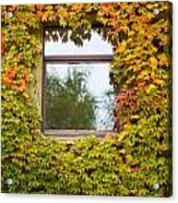 Wall Overgrown With Fall Colored Vine And Ivy Acrylic Print